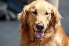 狗狗生长需要哪些常量元素与微量元素